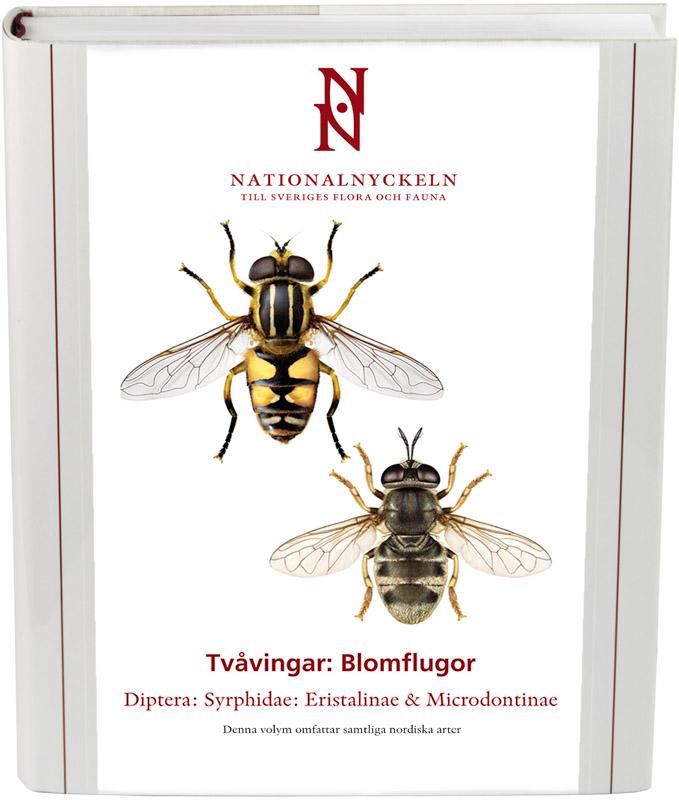 Tvåvingar: Blomflugor. Syrphidae