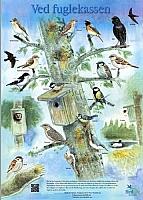 Ved fuglekassen