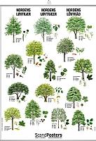 Nordens løvtrær