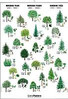 Nordens trær