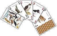Sjøfugler - Sea & Coastal Birds
