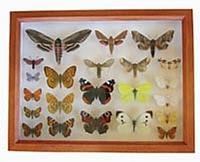 Insektkasse brun x-liten