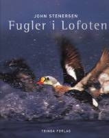 Fugler i Lofoten
