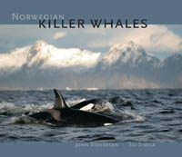 Norwegian Killer Whales
