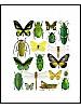 Insektsmiks, grønne og gule