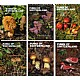 Fungi of Switzerland vol.1-6 set