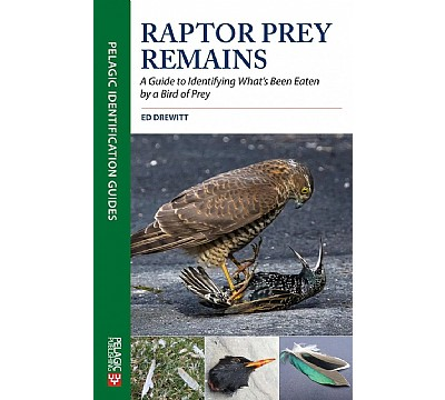 Raptor Prey Remains