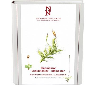 Bladmossor: Sköldmossor - blåmossor. Bryophyta: Buxbaumia - Leucobryum